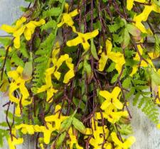 FORSYTHIA DROP, 29IN., YELLOW