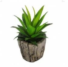 SUCCULENT IN A ROUND WOOD SHAPE CERAMIC  POT, 2-1/2 DIA X 7