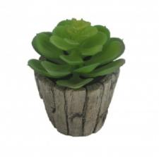 SUCCULENT IN A ROUND WOOD SHAPE CERAMIC  POT, 2-1/2 DIA X 5